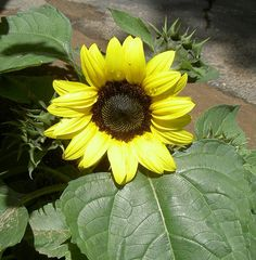 """https://flic.kr/p/WuRms 