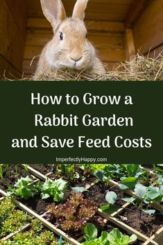 How to Grow a Rabbit Garden and Saved Feed Costs. Better nutrition for your meat rabbits, better nutrition for you. toys Grow a Rabbit Garden Rabbit Farm, Rabbit Garden, House Rabbit, Mini Rex Rabbit, Bunny Cages, Rabbit Cages, Rabbit Toys, Cages For Rabbits, Raising Rabbits For Meat