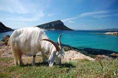 Capo Figari - Golfo Aranci