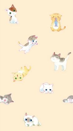 Imagen de cat, cute, and wallpaper