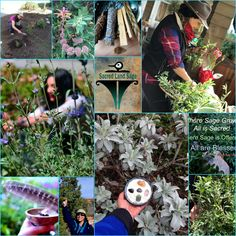 Working close to the Earth with California's native sages and sacred plants makes us happy. Organic and sustainably harvested Sages for your sacred journey. Visit us!
