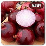 Organic Cabernet F1 Hybrid Onion.