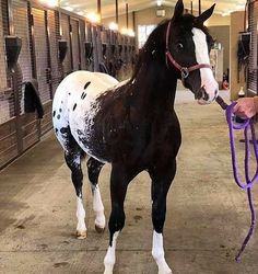 Reining Horses, Thoroughbred Horse, Appaloosa Horses, Large Animals, Animals And Pets, Baby Animals, Beautiful Horse Pictures, Beautiful Horses, Magnificent Beasts