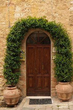 I love this door and the way the plant frames it. Pienza Italy