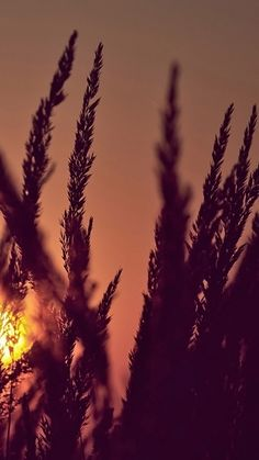 Plant field morning Samsung HD wallpaper 1080x1920