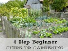 Here is a super easy guide to beginner gardening