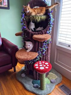 Cat Aesthetic, Aesthetic Room Decor, Crazy Cat Lady, Crazy Cats, I Love Cats, Cool Cats, Cat Tree House, Image Chat, Cat Room