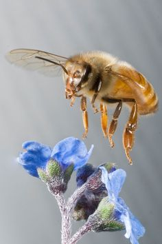 Photos of Insects in Flight Captured with a Custom Laser Beam Camera Rig