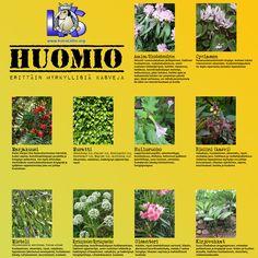 Erittäin myrkyllisiä kasveja http://www.koiraliitto.org/fi/40-erittain-myrkyllisia-kasveja