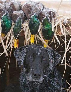 Bonne chasse et bon toutou!!!