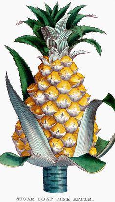 Pineapple print. Good enough to eat.