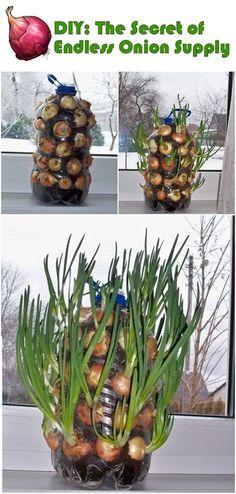 Brilliant vegetable garden tips, tricks and hacks for starters