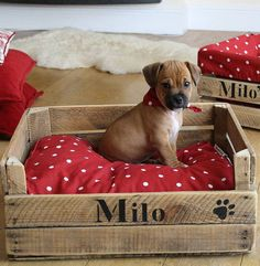 There are many mind-blowing ideas to craft DIY pallets wood dog bed. These ideas will assist you in making a dog bed as you want. Pallets wood dog bed will be Wood Dog Bed, Diy Cat Bed, Diy Dog, Old Wooden Crates, Wooden Boxes, Dog Crates, Dog Furniture, Pet Beds, Pets