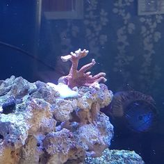 42 best anthony s marine fish tank images marine fish tanks reef