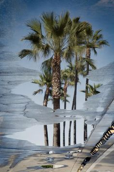 Palm Tree Reflection in the puddle. Manhattan Beach, California. All photos for sale.