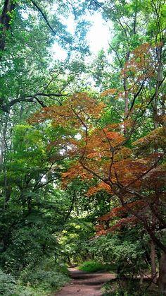 Philadelphia Wissahickon Park