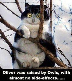 Too Funny! hahahaha Animal Lovers - Google+
