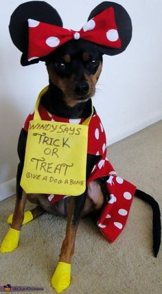 Linda: This is Windy DeDog, she is a rescue Miniature Pinscher and is now a registered Therapy dog at our local hospital, she dresses up every year for Halloween at the...