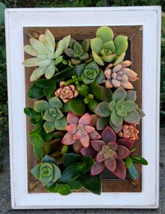 Vertical Living Succulent Wall Hanging or Table by WoogiesPlace