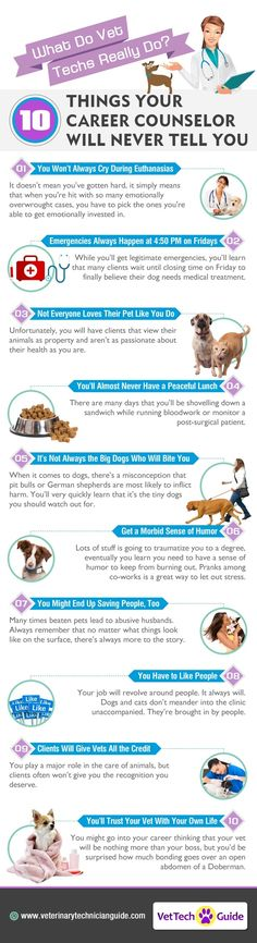 REAL Duties of a Veterinary Technician | Animal Bliss
