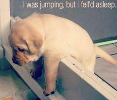 #Puppy #cute