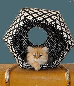 Cat Ball for New Kitten Buy A Kitten, Cat Water Fountain, Cat Scratching Post, Cat Carrier, Cat Accessories, Cat Sitting, Cat Furniture, Cat Design, Cat Gifts