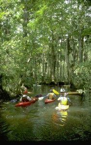 From the Florida Everglades, to Lake Okeechobee and miles of ocean there are plenty of places to explore in the sunshine. But once the sun sets, that doesn't mean it is time to hang up your paddle! Several local kayak outfitters and companies offer special evening tours of the quiet waterways – a completely new view of scenic Palm Beach County. #PalmBeach #Kayak #Waterways #explore