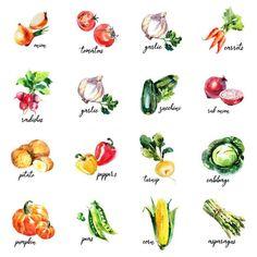 Vegetable Drawing, Vegetable Painting, Vegetable Prints, Watercolor Fruit, Watercolor Paintings, Watercolours, Asian Vegetables, Kitchen Artwork, Printable Pictures