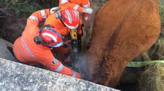 Fire services 'spending millions' on animal rescues - BBC News - Viral Marketing Journal Viral Marketing, Bbc Radio, Bbc News, Animal Rescue, Fire, Pets, Animals, Journal, Animales
