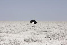 la Beauté rude des Paysage de Namibie par Maroesjka Lavigne (5)