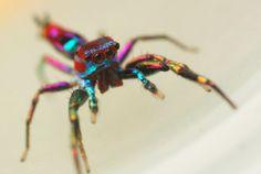 The Trippy Rainbow Spider