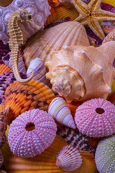 Ocean Wallpaper, Summer Wallpaper, Colorful Wallpaper, Wallpaper Backgrounds, Iphone Wallpaper, Fond Design, Orange Aesthetic, Shell Beach, Ocean Creatures