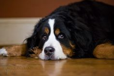 Sweet Otto by Kelly Patterson photography, via Flickr