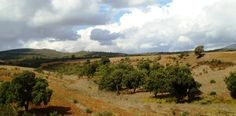 Landscape from Bouira. Algeria.