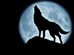 lupi neri - Cerca con Google