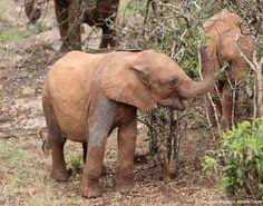 Ndotto you are precious Sheldrick Wildlife (@DSWT)   Twitter