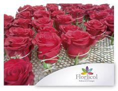Know How de Preservación de Flores de Exportación,Florlicol . - Anuncios Diversos - Todo Puerto Rico