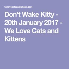 Don't Wake Kitty - 20th January 2017 - We Love Cats and Kittens
