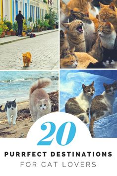Top 20 Purrfect Destinations for Cat Lovers. Click here to download your free eBook: http://eepurl.com/bYhKEn (cats, cat lovers, purrfect, I love cats, destinations for cat lovers, crazy about cats, obsessed with cats)