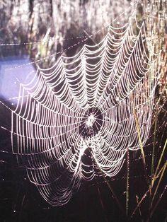 Spider web in Hawaii