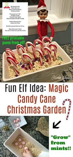 Fun Elf Idea: Magic Candy Cane Christmas Garden + FREE Printable Poem Get poem here: https://www.mamacheaps.com/2017/11/fun-elf-idea-magic-candy-cane-christmas-garden.html