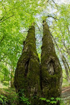 A primeval forest at Yastugatake, Nagano, Japan Could be sister trees Beautiful World, Beautiful Places, Unique Trees, Old Trees, Tree Roots, Nature Tree, Tree Forest, Tree Of Life, Amazing Nature