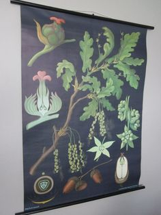 Vintage Botanical Chart by housewarming101 on Etsy, $225.00