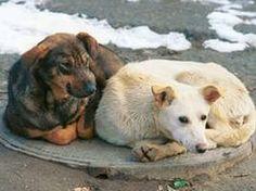 помогите построить приют самодельный для собак,их много у нас и начинают отстреливать,жилко очень,для начала нужно 10000руб.чтоб я построил каркас и крышу и обгородил сеткой.вот номер кошелька +79527366988