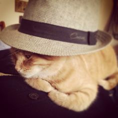 #cat #cats #catlover #puppy #kitty #kitten #kind #catstagram #hat #vintage #bored #chic #fashion #tenderness #trendy #love #lovely #orchidea #novellaorchidea #novella #raccontierotici #racconti #ebook
