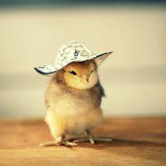 chicks-in-hats-09.jpg