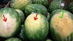 Voici comment choisir une bonne pastèque … Cette astuce, je l'ai appris d'un agriculteur local !