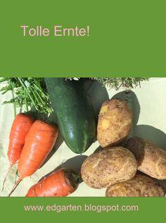 Reichhaltige Ernte aus dem Gemüsegarten. #edgarten #gartenblog #gemüse Sweet Potato, Carrots, Potatoes, Vegetables, Food, Natural Garden, Harvest, Amazing, Carrot
