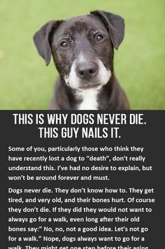 I'm sorry, I know this board is suppose to be fun but this is just too powerful and meaningful. Yes you will cry reading this, but honestly it's worth it. Hug your dog please. Love your dog All Dogs, I Love Dogs, Dogs And Puppies, Animals And Pets, Cute Animals, Pet Loss Grief, Dog Grief, Loss Of Dog, Food Dog