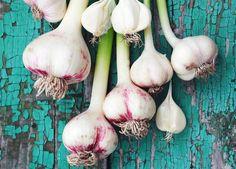 ¡Deja de comprar ajo! nira como puedes cultivar en tu casa - Taringa! Natural Acne Treatment, Acne Treatments, Acne Control, Plantar, How To Treat Acne, Natural Glow, Compost, Garlic, Gardens